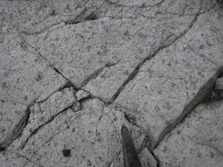 Tonalite, Pluton de Carpentier (nAcrp)